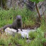Vogelgat_hermanus_hiking_002023jpg